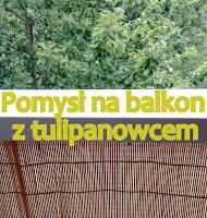 http://tulipanowiec.blogspot.com/2016/08/pomys-na-balkon-wakacyjne-link-party.html