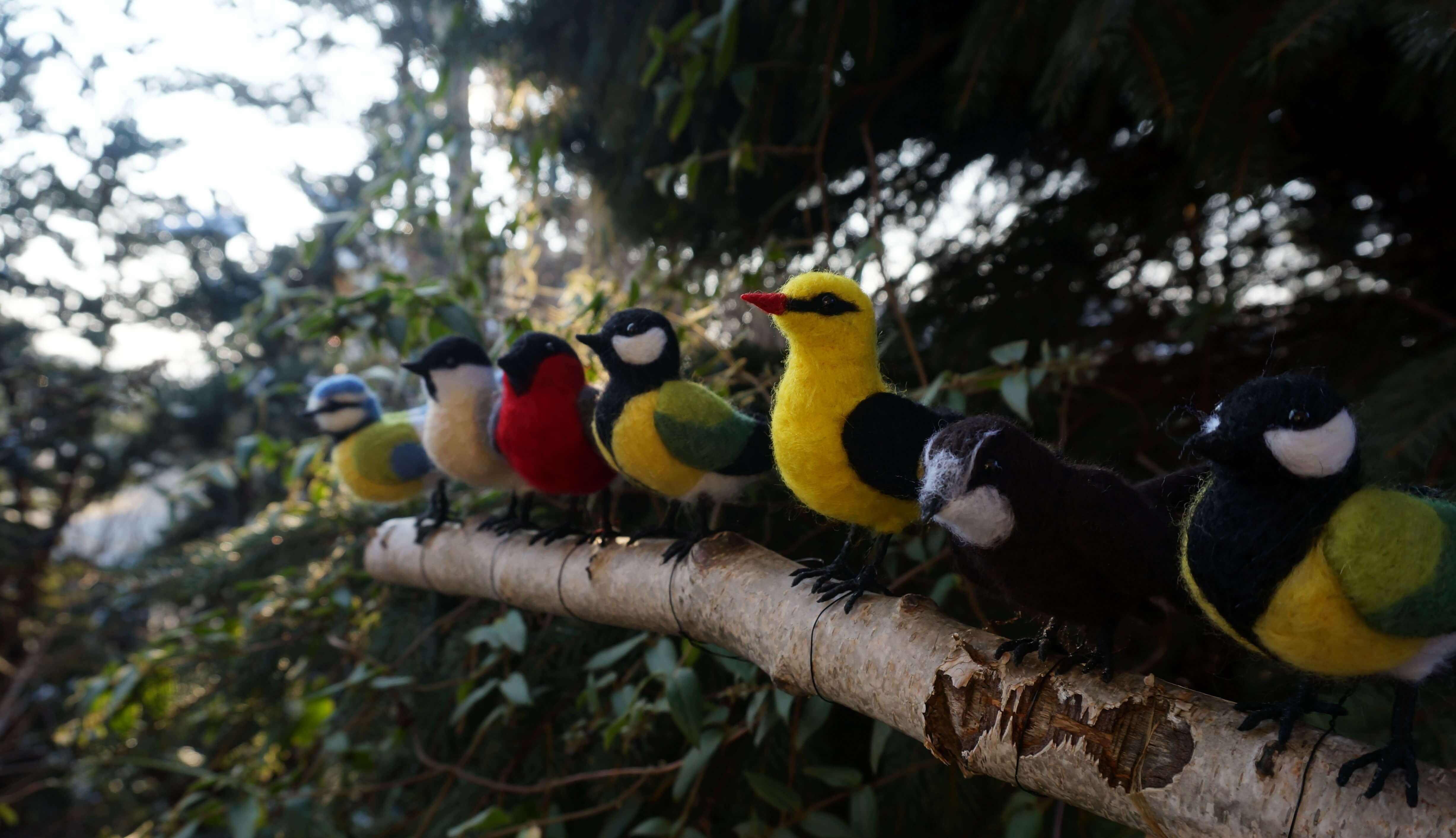 ptaki filcowanie