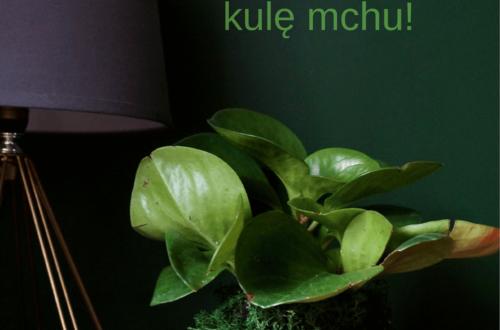 Kule mchu kokedama diy